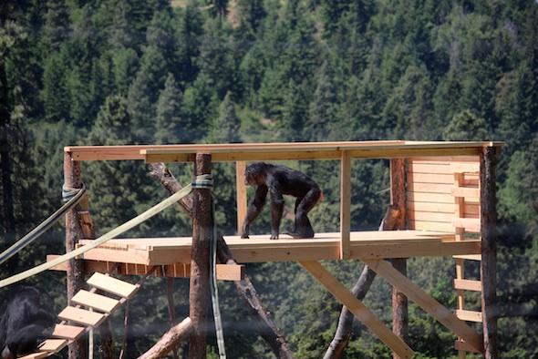 web_foxie_walk_tower_view_jb_IMG_3231