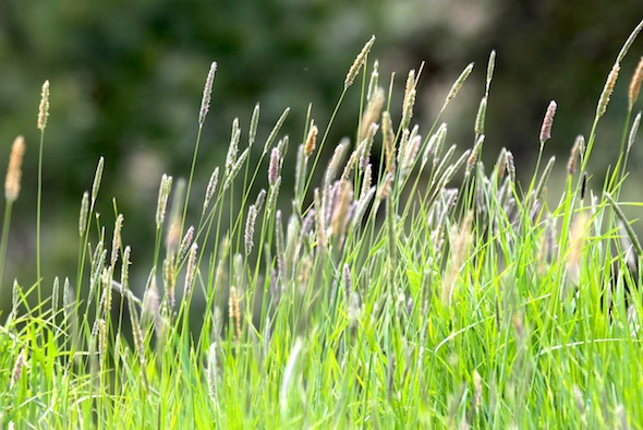 web_grass_blowing_yh_kd_IMG_2702