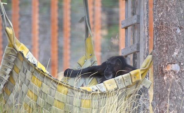 Annie chillin in the hammock