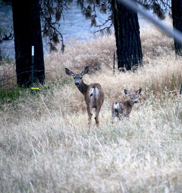 web_doe_and_fawn_look_back_kd_IMG_3510
