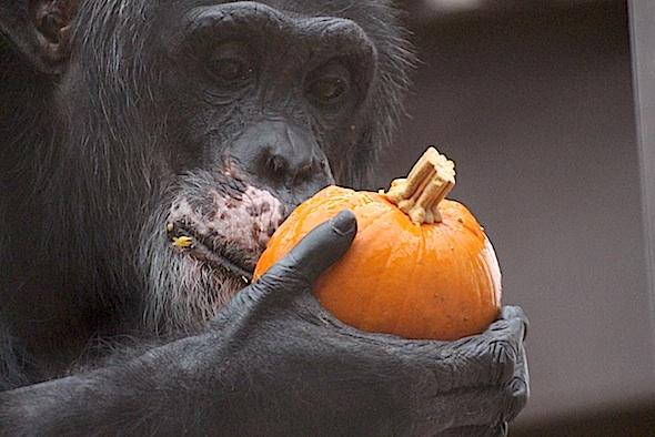 web_Burrito_eat_small_pumpkin_birthday_party_food_halloween_gh_aw_IMG_0237