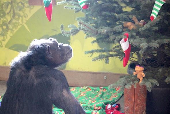 web_Annie_look_up_at_tree_Christmas_2015_PR_ek_IMG_7165