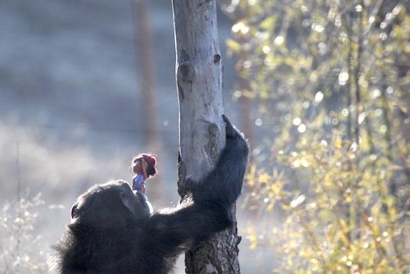 web_foxie_france_dora_climb_pole_yh_jb_IMG_7115