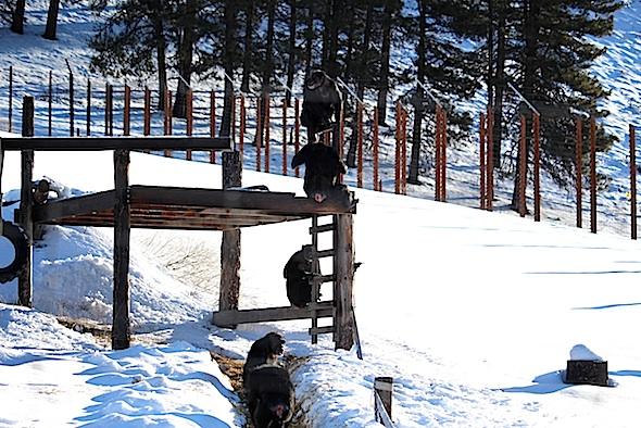 web_Jamie_Foxie_Missy_Jody_Annie_climb_platform_snow_yh_aw_IMG_8360