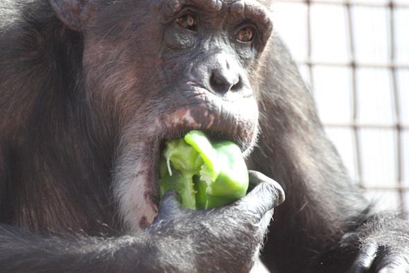 web_Missy_sit_eat_pepper_close-up_gh_dg_IMG_9754