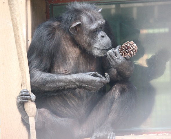 web_Annie_sit_window_sill_look_at_pine_cone_evening_enrichment_IMG_4408
