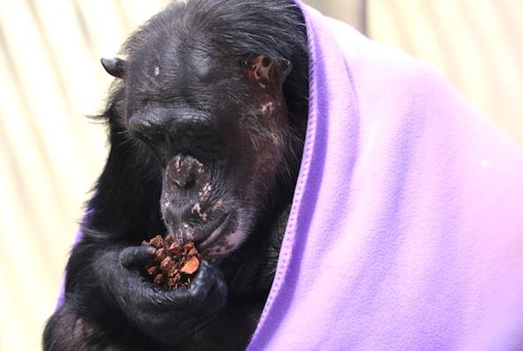 web_Negra_sit_pinecone_eat_purple_blanket_structure_gh_dg_IMG_5147