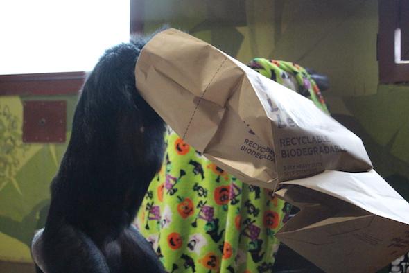 web_jamie_bipedal_head_in_paper_bag_halloween_birthday_party_pr_kd_img_8905-copy