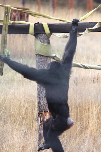 Jamie swinging