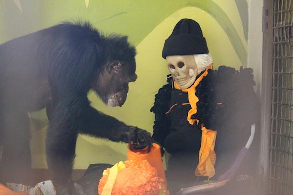 web_jamie_inspect_scarecrow_halloween_birthday_party_pr_kd_img_8893-copy