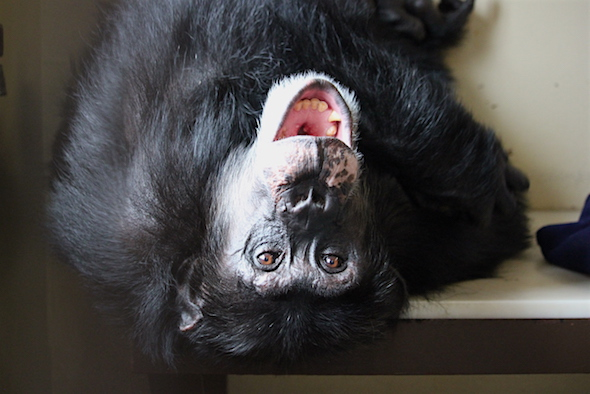 web_burrito_upside_down_fr4_bench_look_at_camera_yawn_kd_img_7798