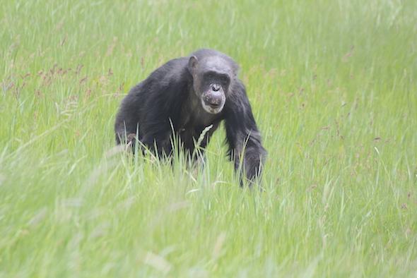negra in the grass