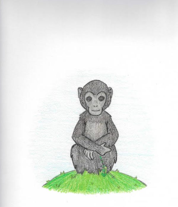 Chimp on the Grass