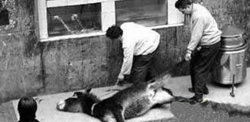 abusi sugli animali