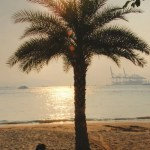 Xiamen pictures-palm