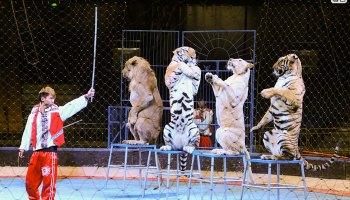 Chinese Circus