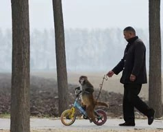 Chinese rural circuses