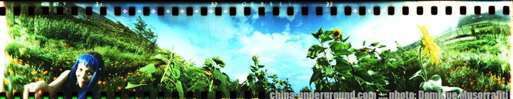 spinner_360_sunflowers