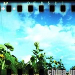 spinner_360_sunflowers