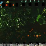 spinner_360_sunflowers_008