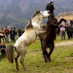 horses-004