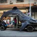 002-Whale-shark-China-Fujian-2014