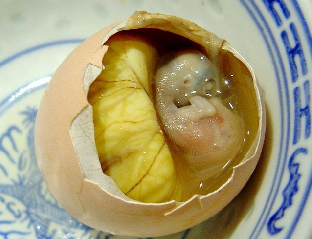 Alive duck embryos