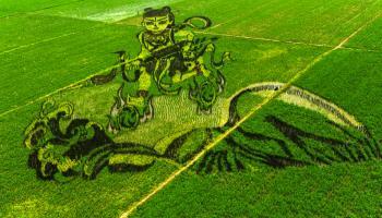 Rice-paddy-art-China