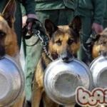Chinese Police dogs waiting for dinner