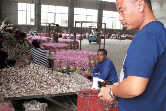 CHINA-AGRICULTURE-GARLIC-3