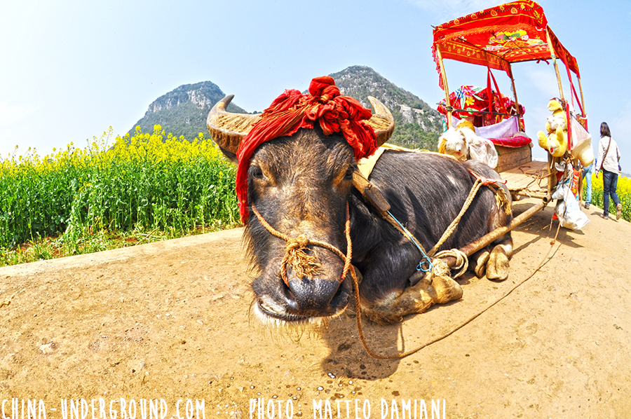 Luoping-012