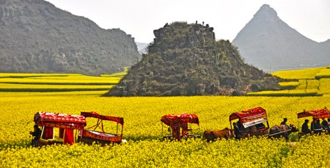 The Amazing Rapeseeds Fields of Luoping, China - Luoping Images