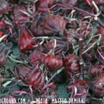 tulou-seeds-2