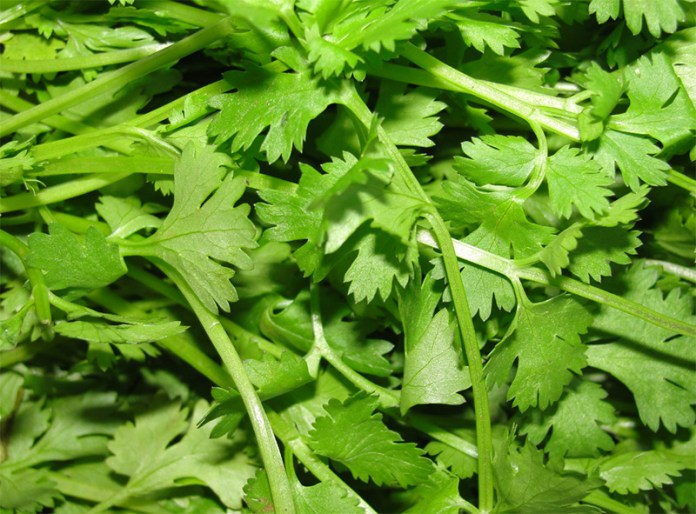 001chinese-parsley