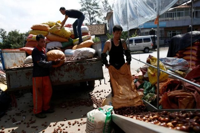 People sort chestnuts in Gulou Village outside China's Dandong, Liaoning province, at the border with North Korea, September 11, 2016. REUTERS/Thomas Peter