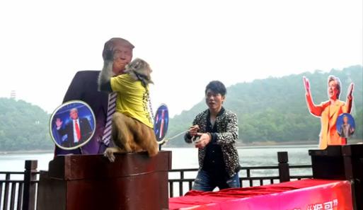 president_trump_monkey