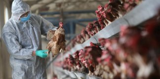 China bird flu virus