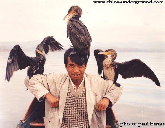 Cormorant fishing, Erhai Lake, Dali, Yunnan