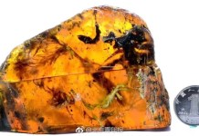 Ancient birds preserved in amber