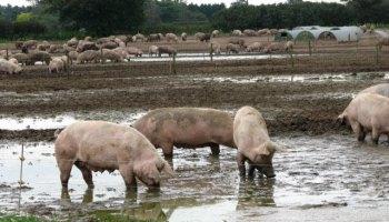 China bans Canadian meat imports
