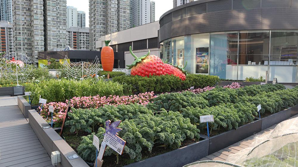 Rooftop-Farm-at-Metroplaza-Shopping-Mall_Photo-Credit-Rooftop-Republic_Natalie-Lam