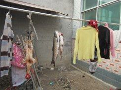 Hand washed laundry hanging up next to dead fish.