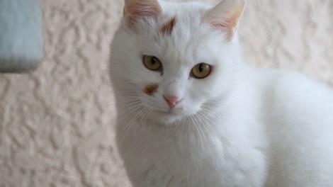 pet-adoption-cut-5-00_05_40_22-still006