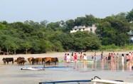 Cows on Cheung Sha beach.