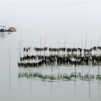It is the Seaweed Harvest Time of Fujian Xiapu