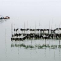 It is the Seaweed Harvest Time of Fujian Xiapu