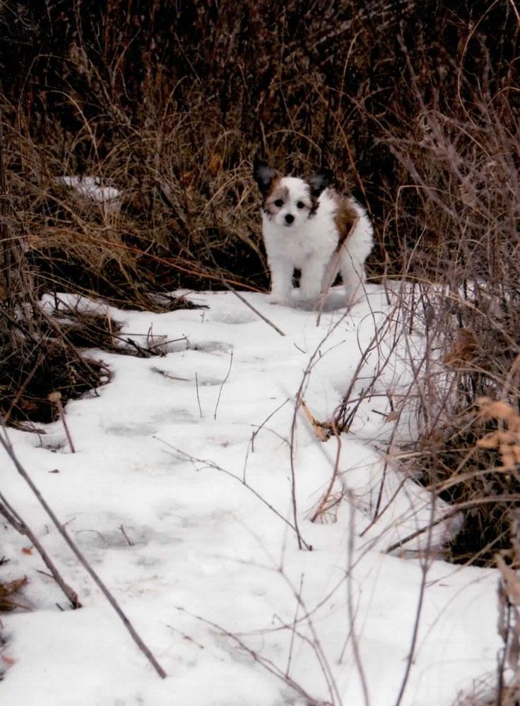 Shylo Loves snow