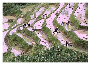 Image result for chinese agricultural revolution
