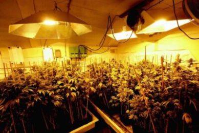 2 7 - 在美国种大麻的风险和收益 以加州为例