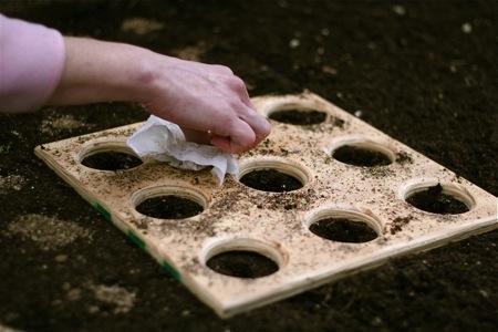 planting-beet-seeds1